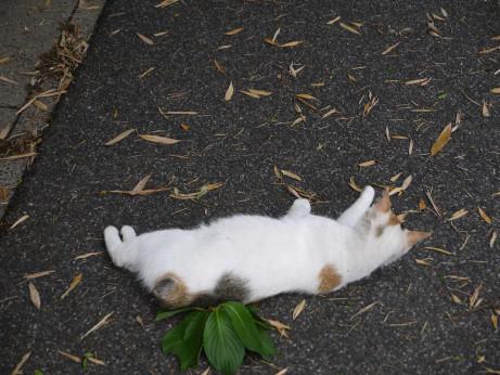 20120623_cat2