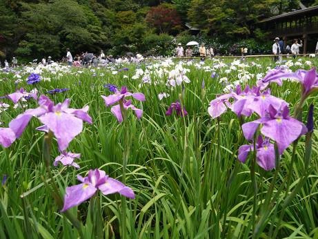 20120628_syoubu2