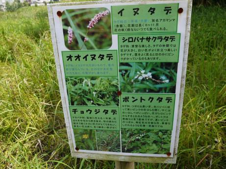 20120711_negiuchi_rekishi_park08