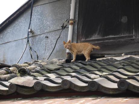20120722_cat