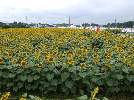 20120723_himawari03