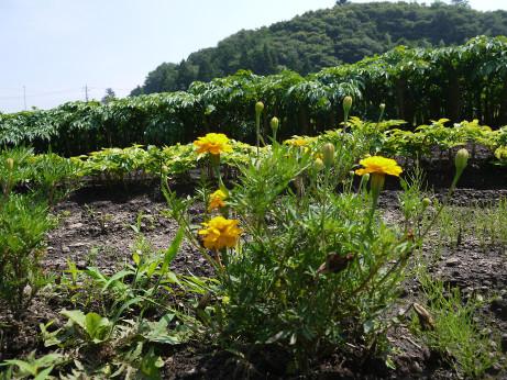 20120815_flower