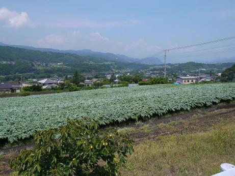 20120815_harake2