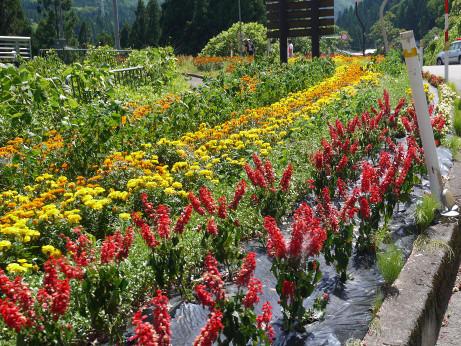 20120824_flower