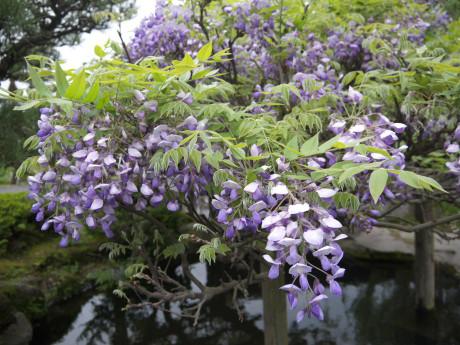 20120902_fuji