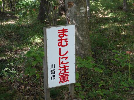 20121012_mamushi