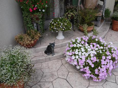 20121019_cat