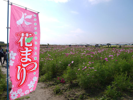 20121021_kosumosu2