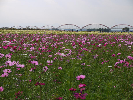 20121021_kosumosu8