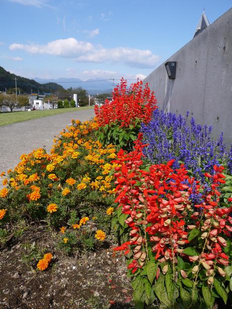 20121112_flower