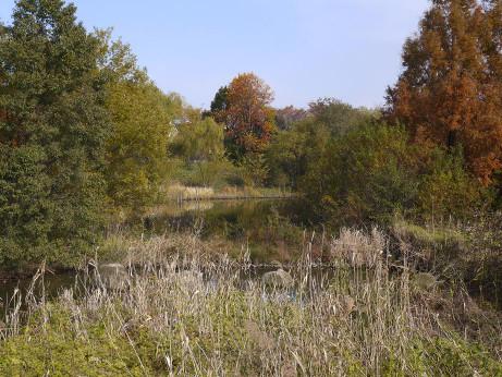 20121128_kandori_park_3