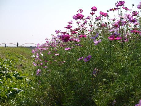 20121129_kosumosu1