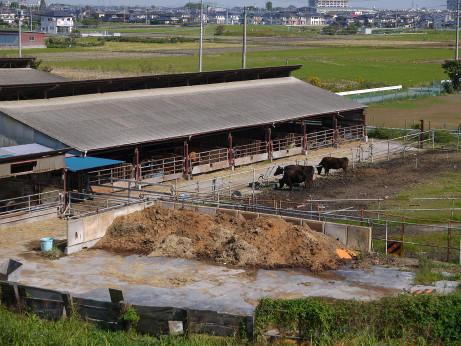 20121129_ushi