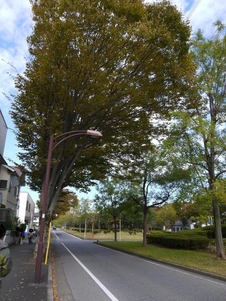 20121211_road03