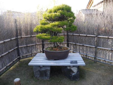 20121220_bonsai1