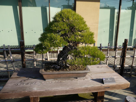 20121220_bonsai2