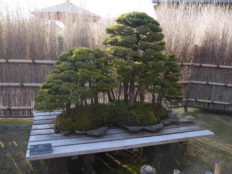 20121220_bonsai3