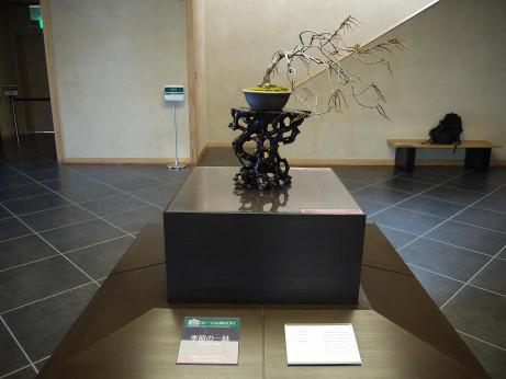 20121220_bonsai4