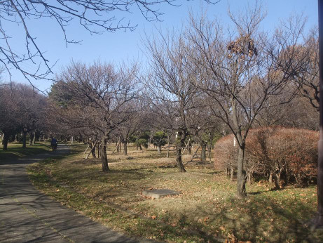 20121222_bairin