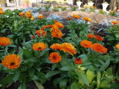 20121222_flower