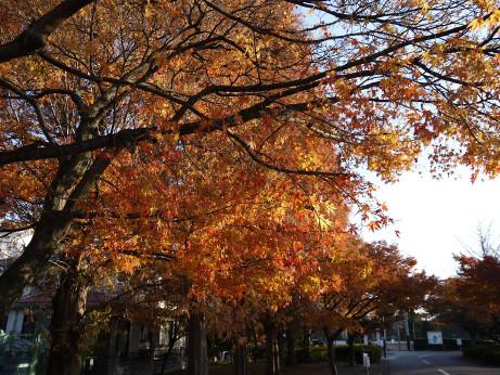20121222_momiji2