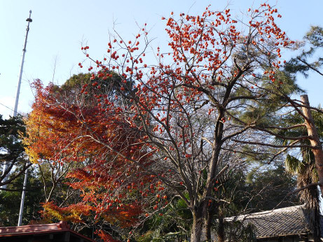 20121226_kouyou_kaki