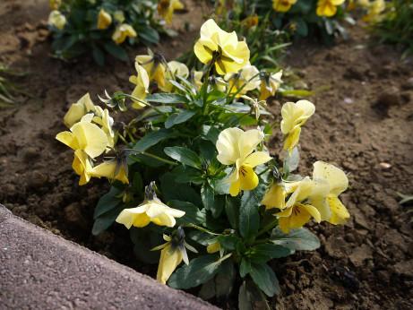 20130219_flower