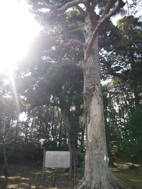20130412_tree