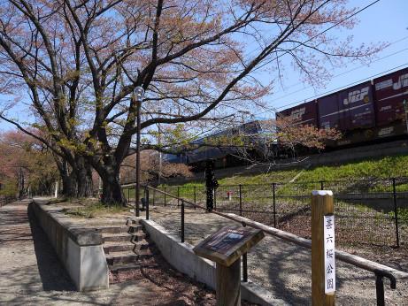 20130516_jinrokuzakura_park2