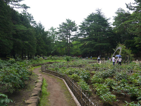 20130717_rose_garden