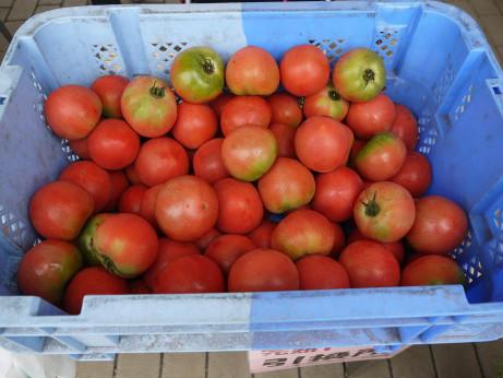 20130812_tomato1