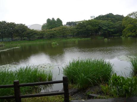 20131022_sirahatanuma3