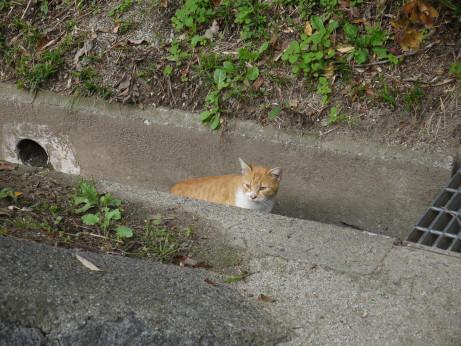 20131122_cat