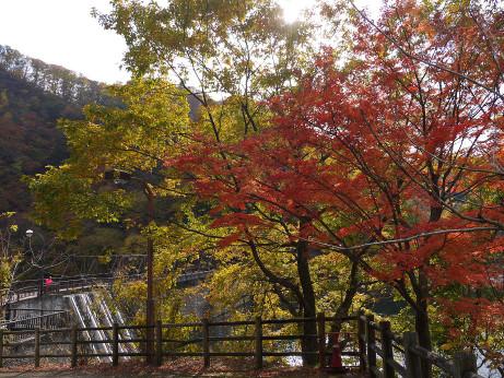 20131208_momiji2