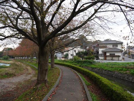 20131217_sakura_namiki