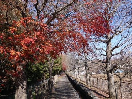 20131225_heirinjibori7