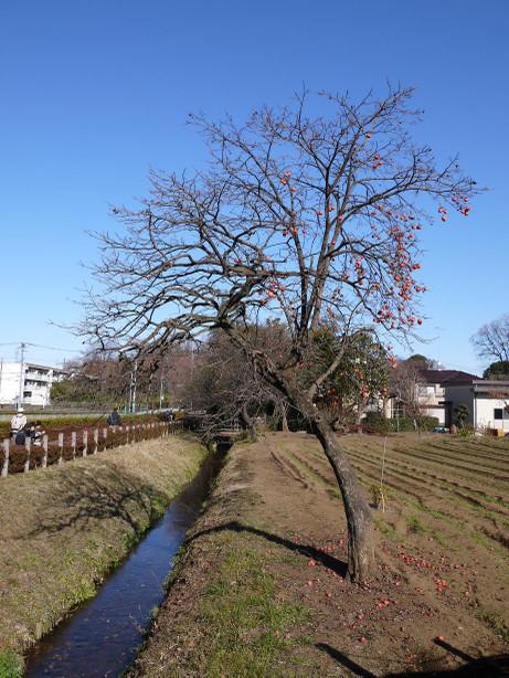 20131226_ryokudou5
