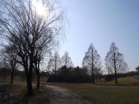 20140128_tree4