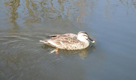 20140131_water_bird