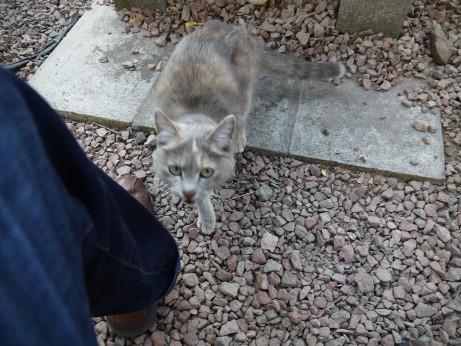 20140208_cat2