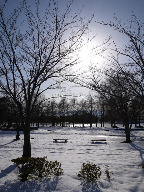 20140211_snow01