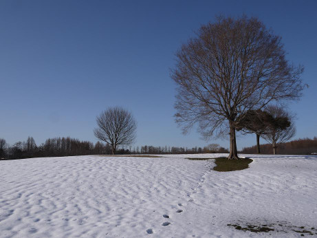 20140211_snow02
