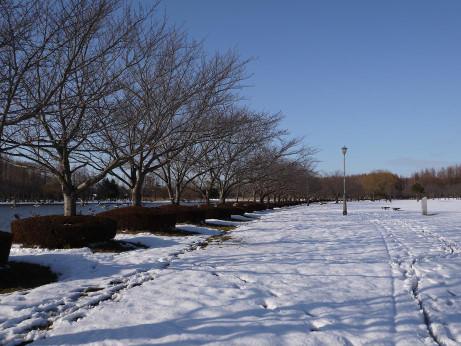 20140211_snow10