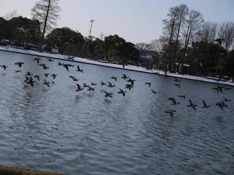 20140211_snow15