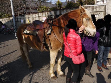20140310_pony