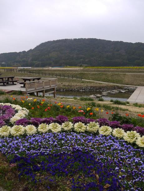 20140325_flower1