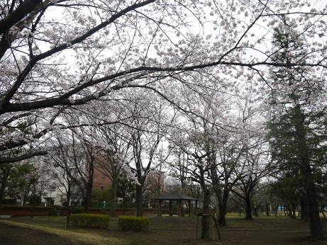 20140331_sakura14