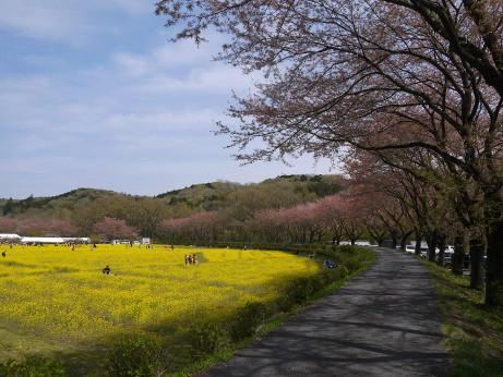 20140414_nanohana09
