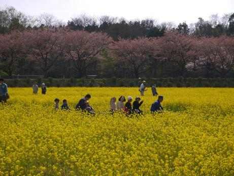 20140414_nanohana10
