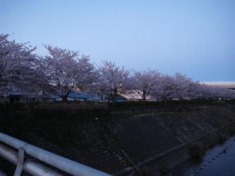 20140415_sakura05